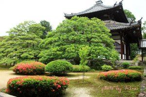 サツキ彩る庭園 鹿王院