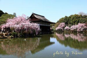 平安神宮の桜と岡崎十石船