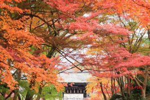 毘沙門堂の秋