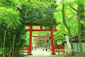 新緑萌える 糺の森