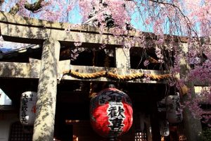 雨法院 <西陣桜巡り>